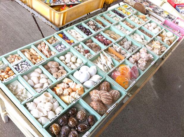 貝殻を売っている